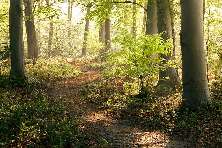Pathway leading through a British woodland in spring.
