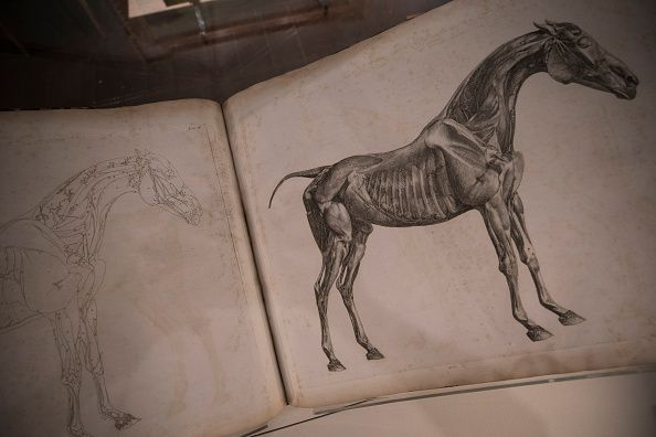 A Look Inside Palace House: The National Heritage Centre for Horseracing And Sporting Art