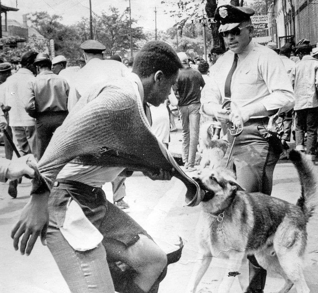 Un manifestante afroamericano atacado por un perro policía durante las manifestaciones contra la segregación, Birmingham, Alabama, 4 de mayo de 1963.