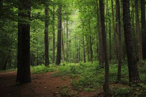Forest in Chapel Hill, North Caroline, USA