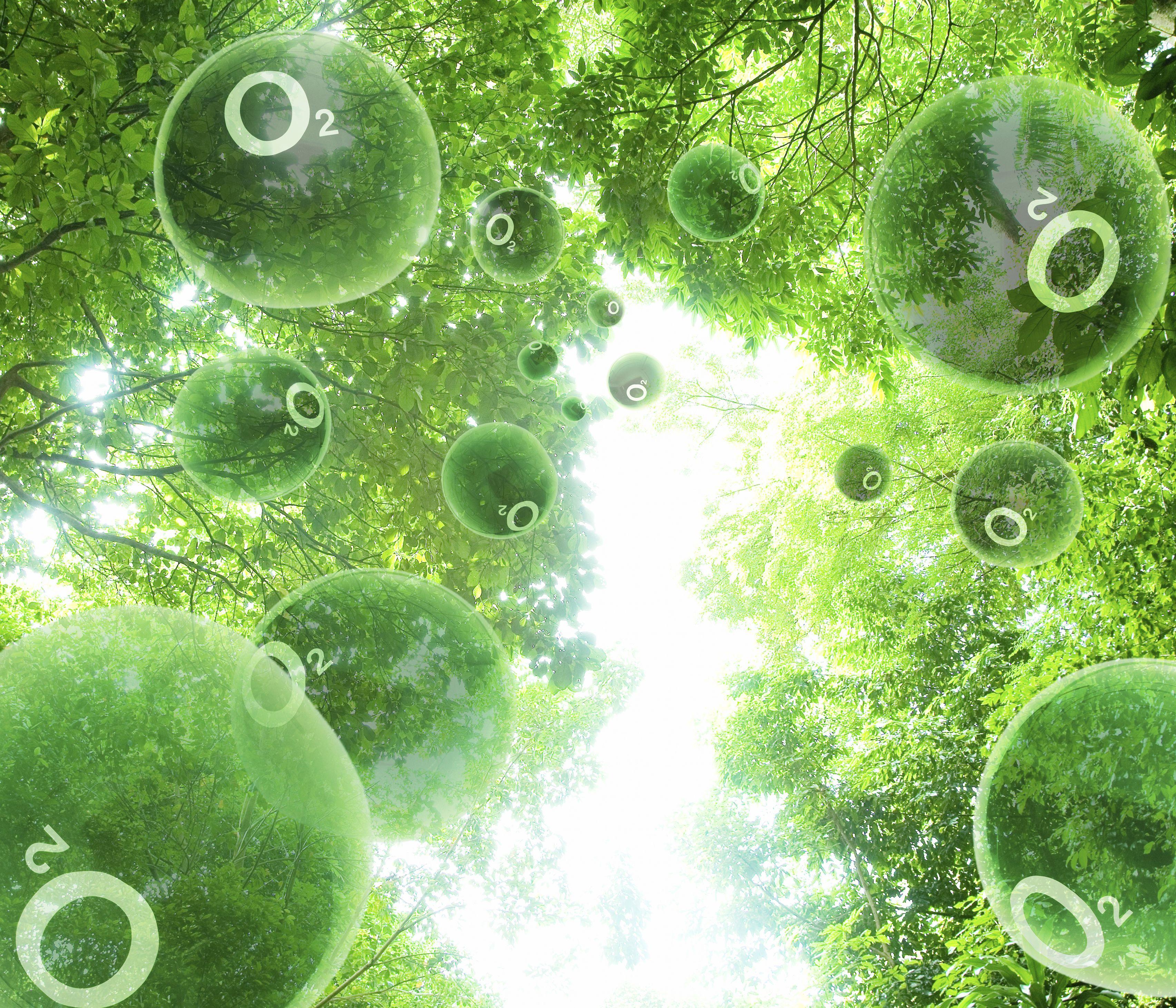 Los organismos fotosintéticos liberan oxígeno y fijan carbono, dando a la Tierra una atmósfera respirable.