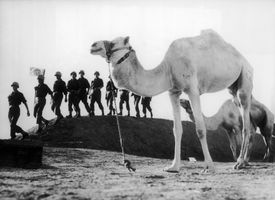 UN Troops In The Sinai Desert during Suez Crisis