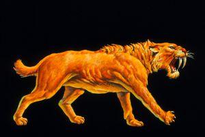 Artwork of a sabre-toothed cat (Smilodon sp.)