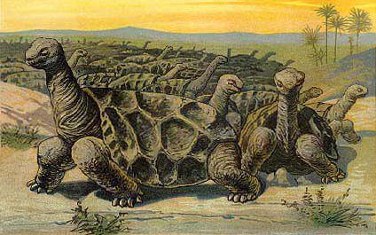 Illustration of a herd of Rodrigues giant tortoises