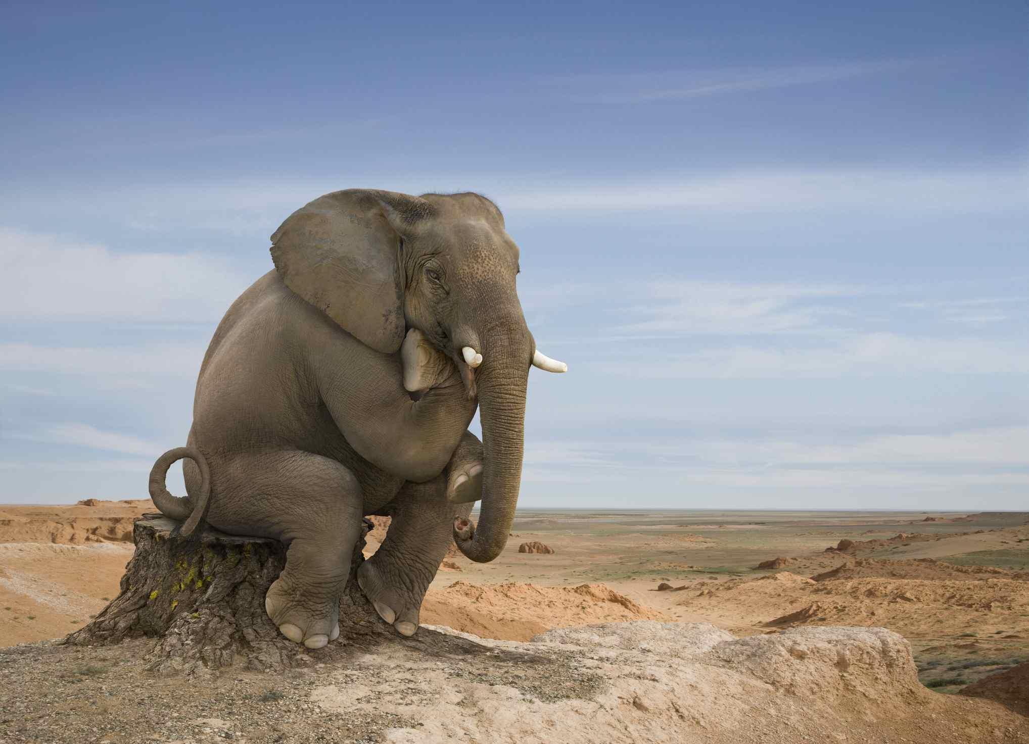 elephant thinking