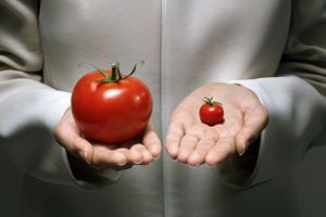 GMOs may affect evolution