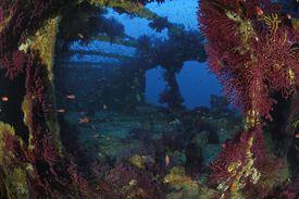 Donateur Wreck, Cote d'Azur, France