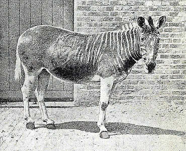 100 recently extinct animals