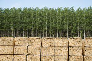 Usa, Oregon, Boardman, Orderly Stacks of Timber in Timber Plantation