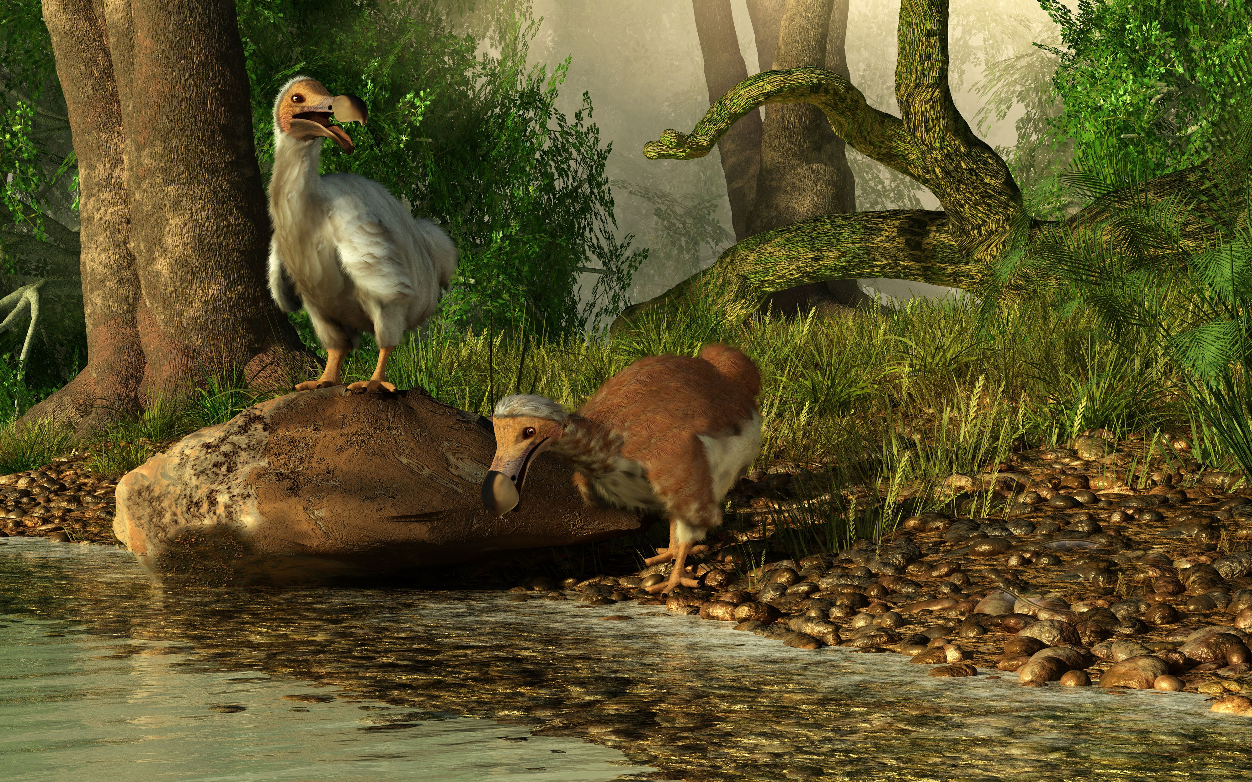 A pair of Dodo birds drinking at a river