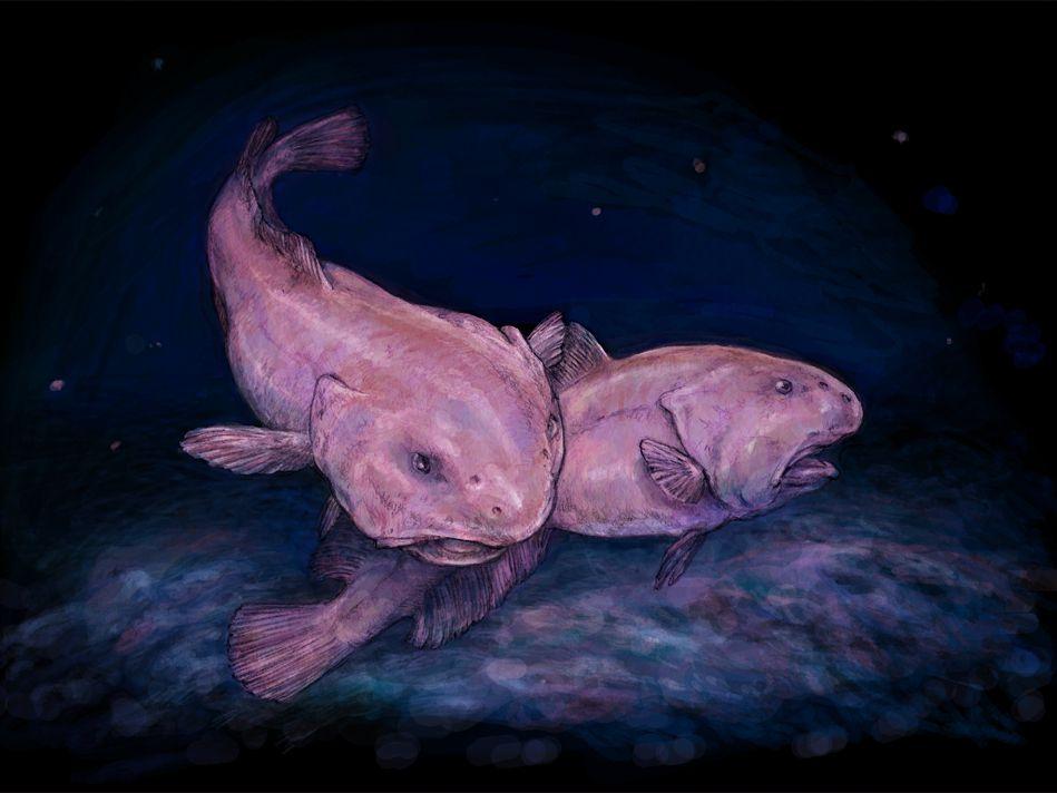 Weird Fish Head 10