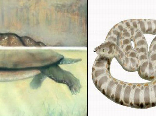 carbon dating turtle