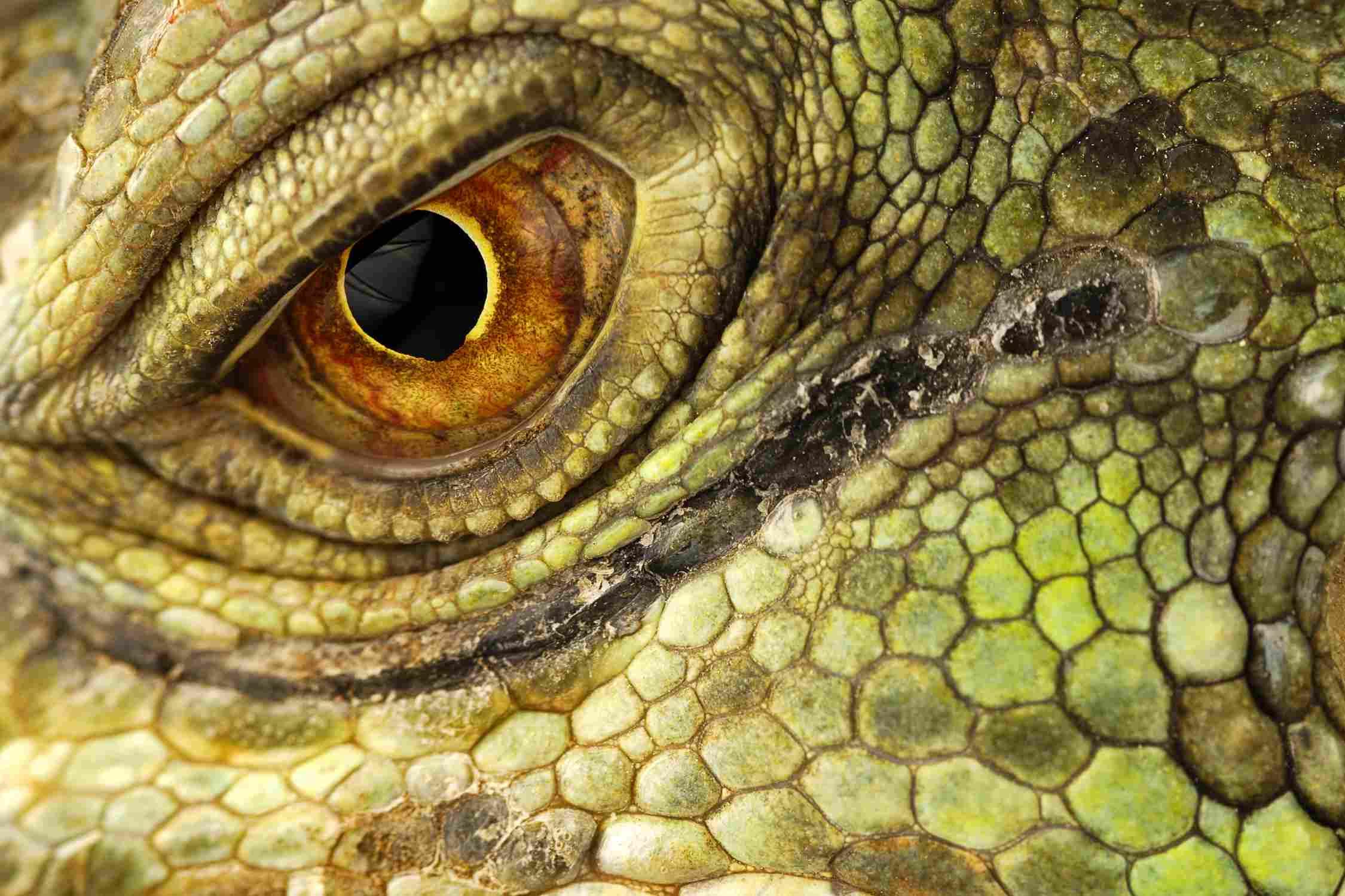 Die Augen lebender Tiere geben Hinweise auf ihre Evolutionsgeschichte.