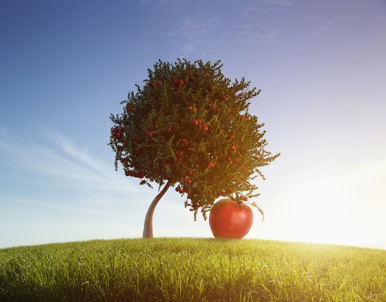 an oversized apple bending a tree
