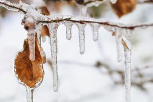 Icicles and frozen autumn leaf hanging at ..