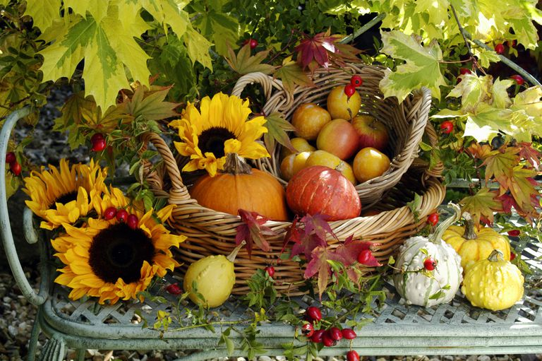 Bounty of the fall harvest displayed outdoors