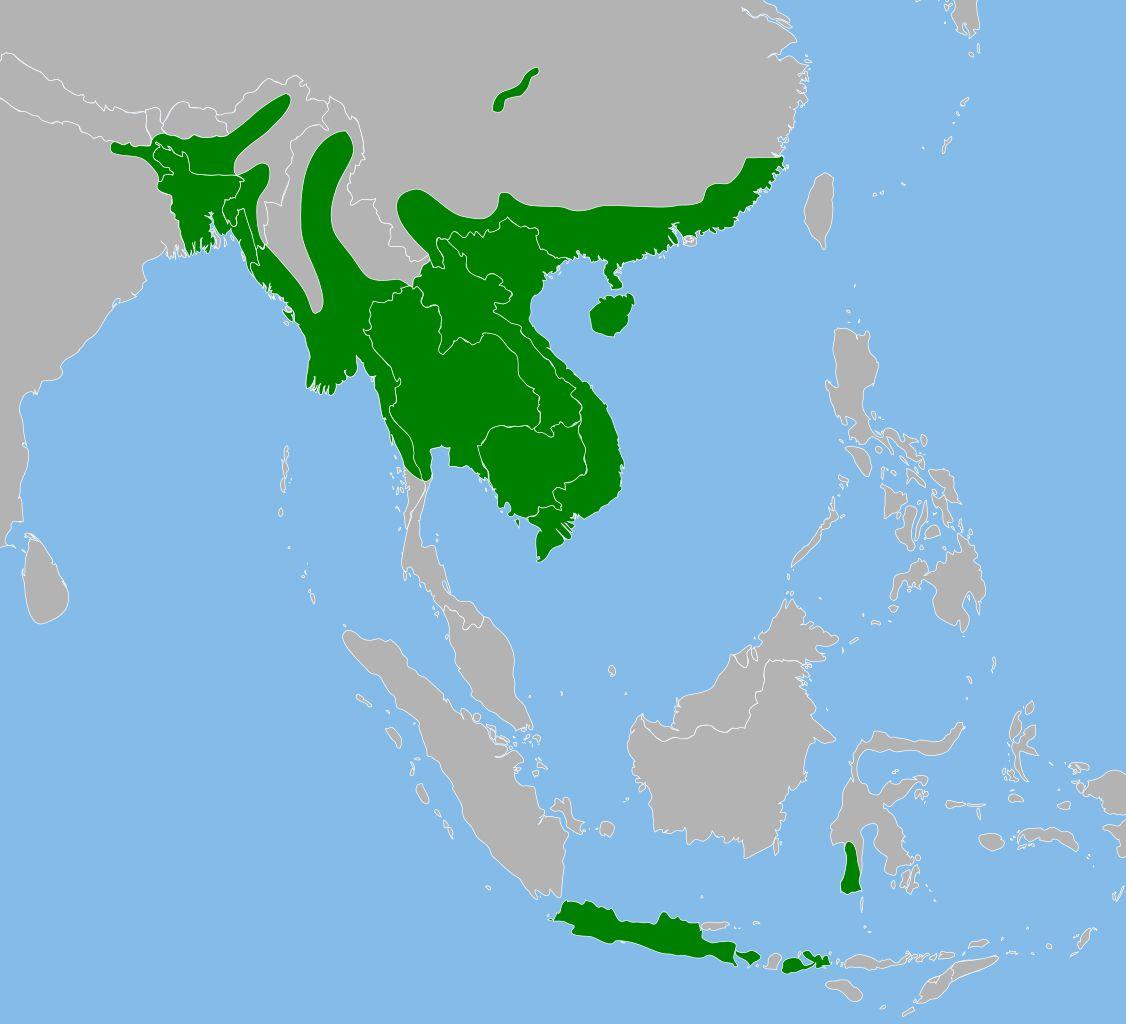 Rango de pitones birmanas en Asia.