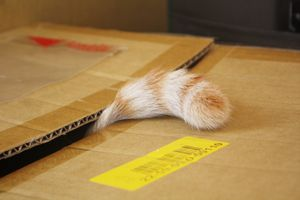 Cropped Tail Of Cat In Cardboard Box