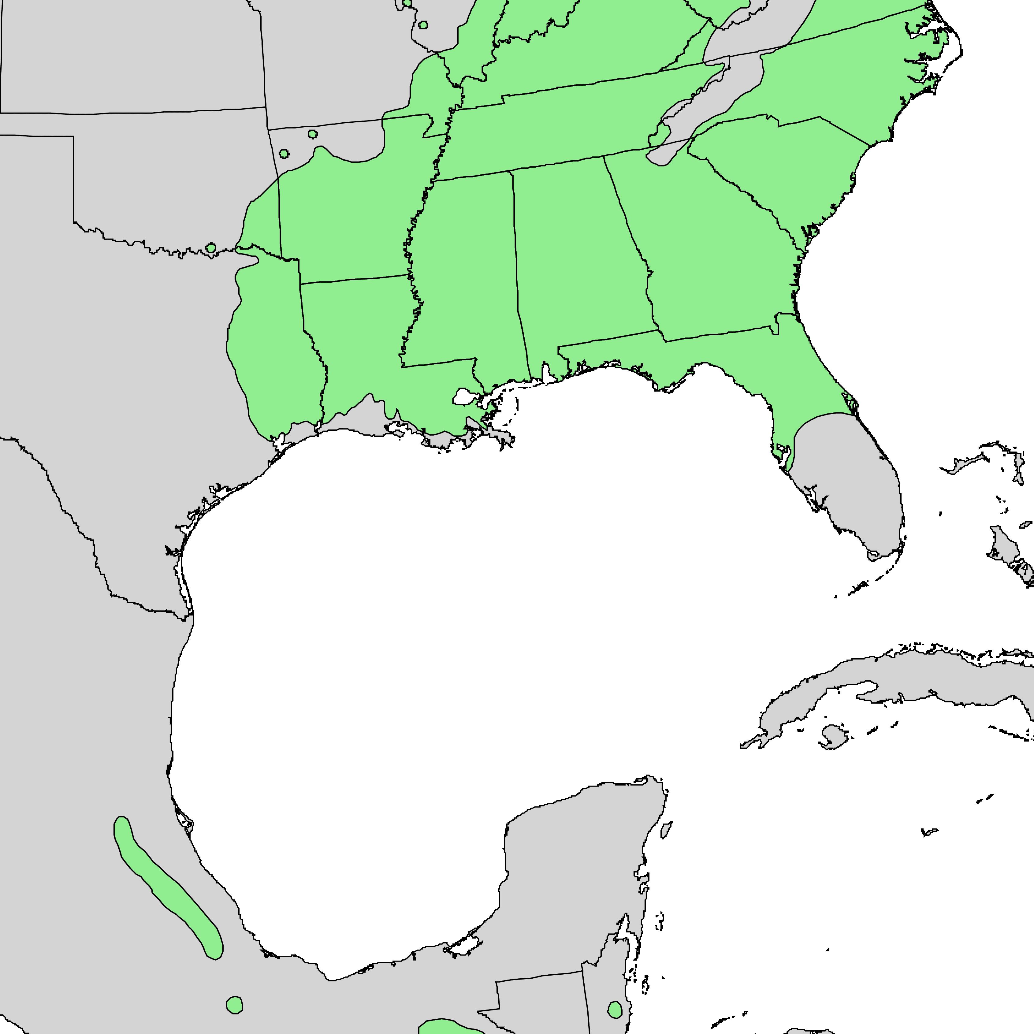 Sweetgum 100 Most Common North American Trees