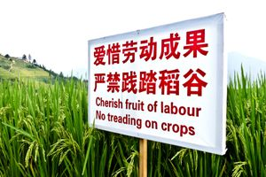 Chinese language sign warns not to tread on crops