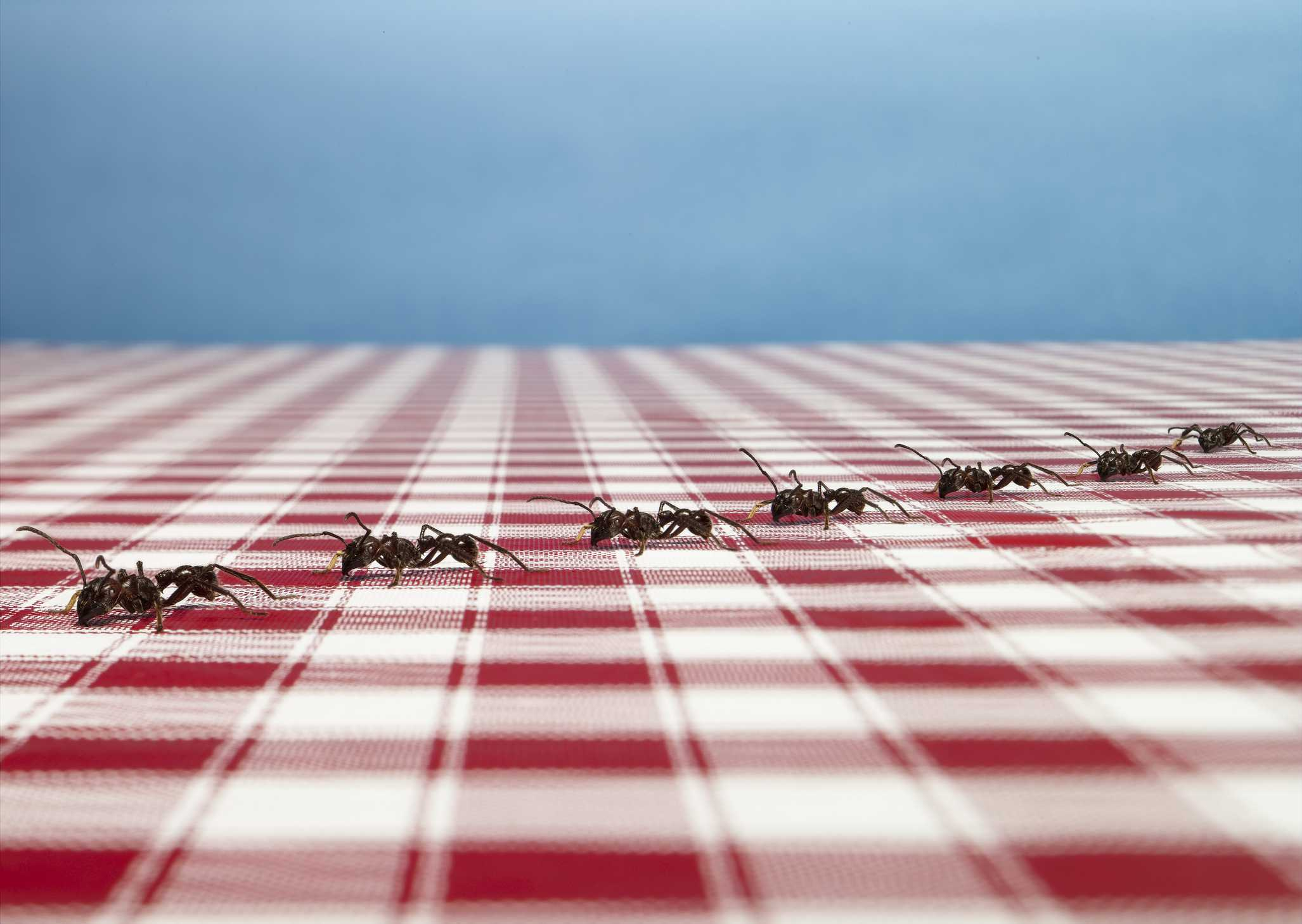 Ants on a tablecloth