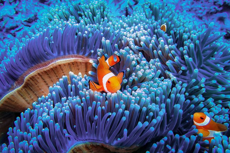 oceans the deep blue sea fun facts and pictures for kids oceanography for kids