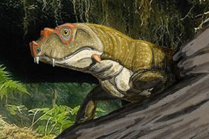Despite its name, Tetraceratops wasn't related to the much later Triceratops