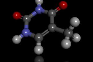 Illustration of a thymine molecule