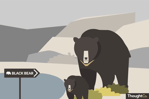 A mother black bear and cub in a zoo with a sign
