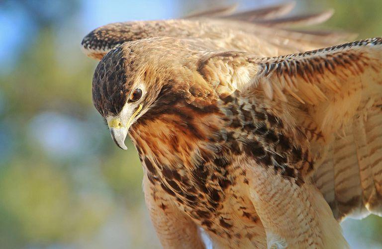Animal Totems Bird Totem Photo Gallery