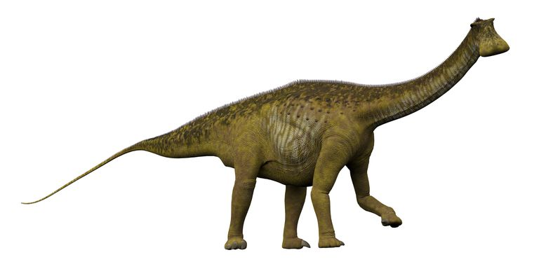Illustration of the dinosaur, Nigersaurus from the side.