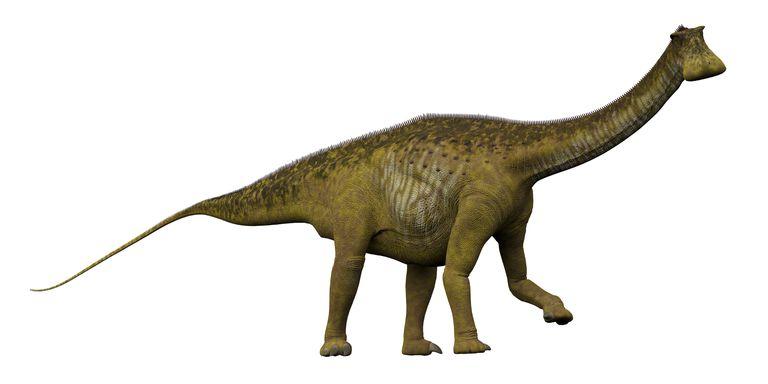 Illustration of the dinosaur, Nigersaurus from the side.