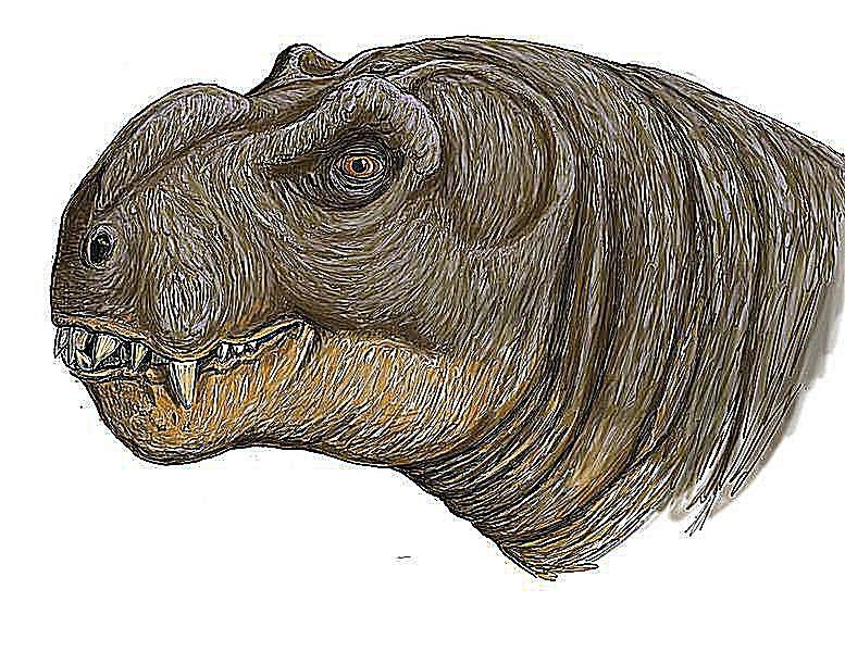deuterosaurus