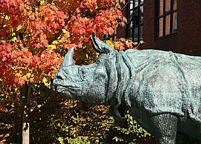 Harvard University - Bessie the Rhino in front of Harvard's Bio Labs