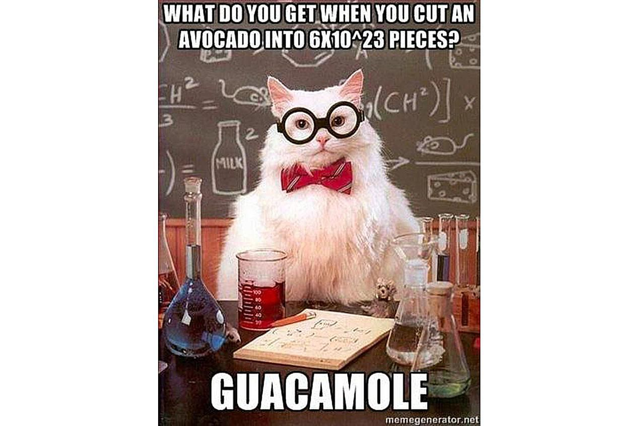 Chemistry Cat knows how to fiesta!
