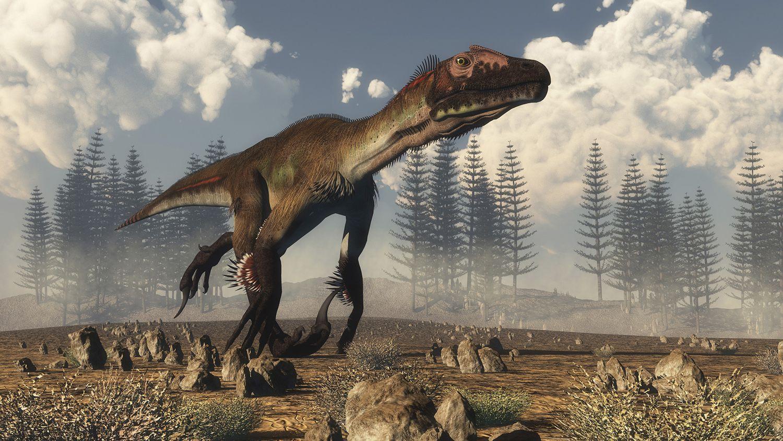 10 Facts About Utahraptor The World S Biggest Raptor Es dinosaurio fue con mucho, el mayor y más fiero de los dromeosáuridos o reptiles corredores. 10 facts about utahraptor the world s