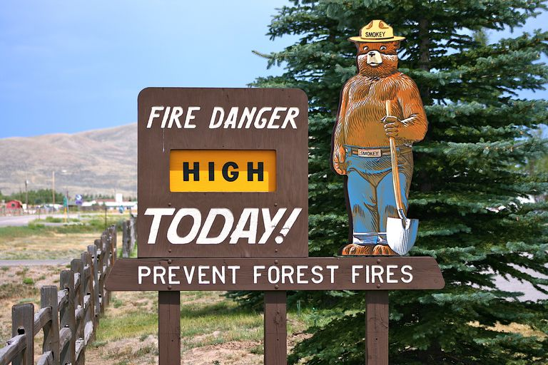 The History and Career of Smokey the Bear