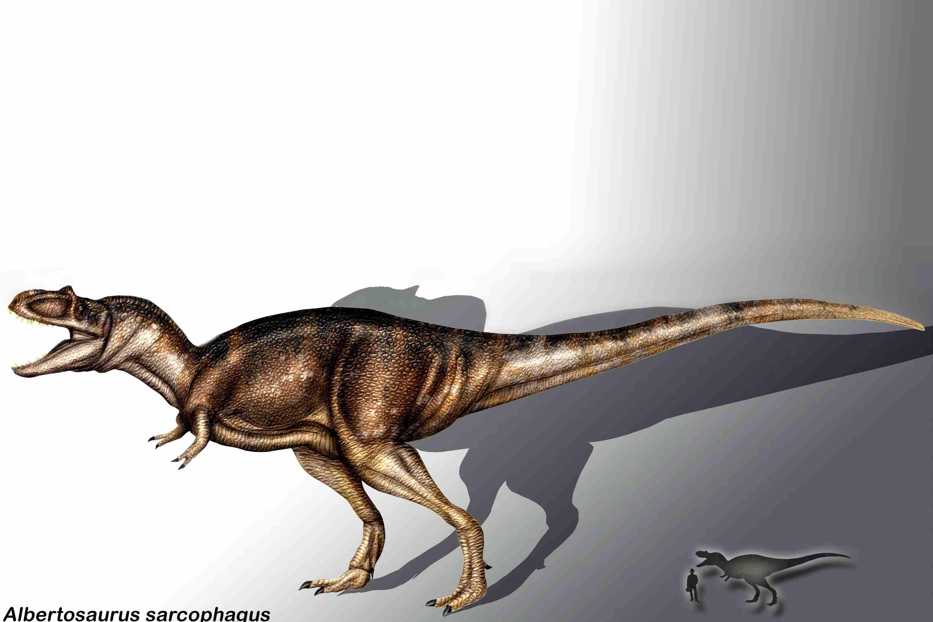 Albertosaurus appears in scale alongside a human male