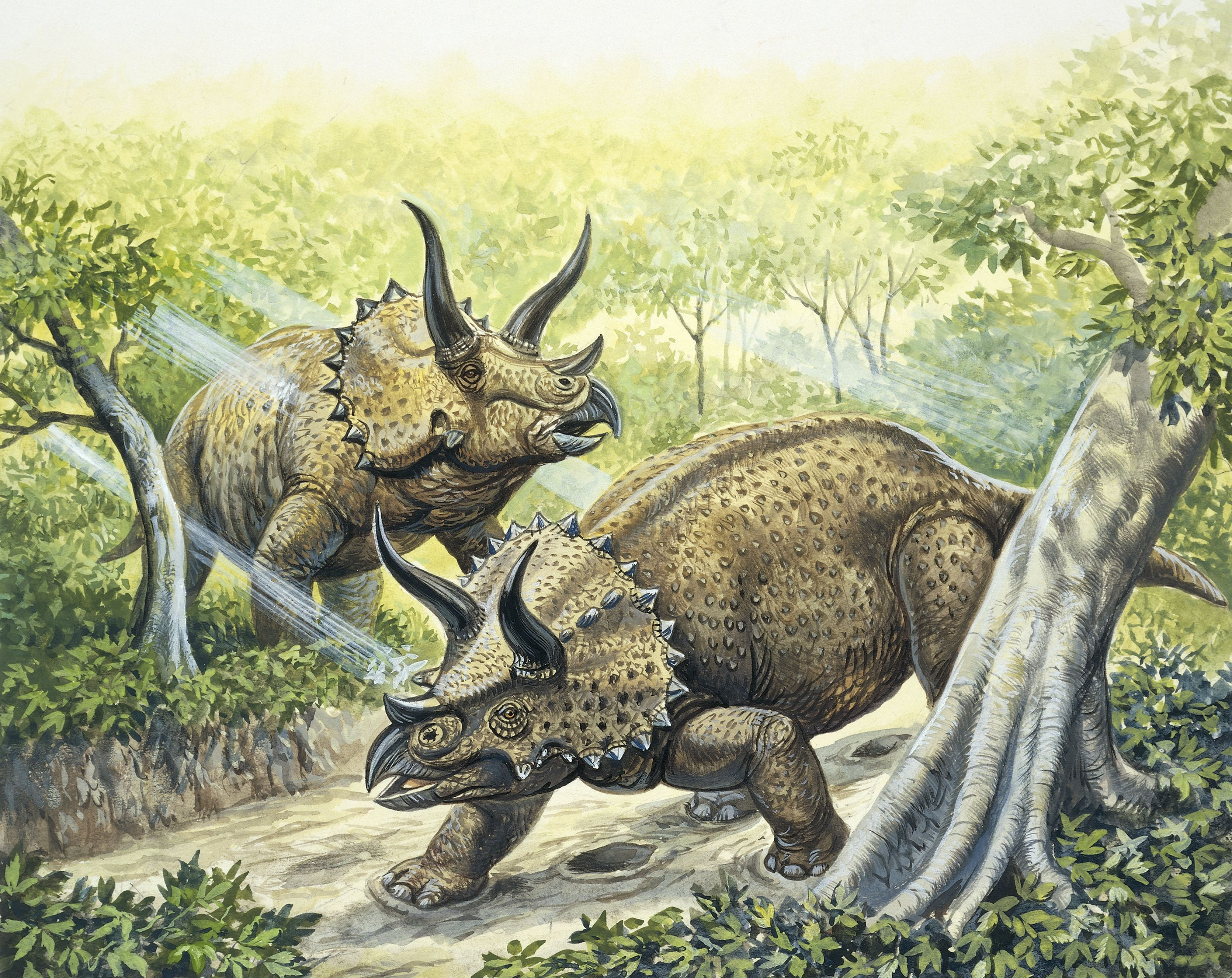 Illustration of two plant-eating Triceratops roaming around a lush green wilderness