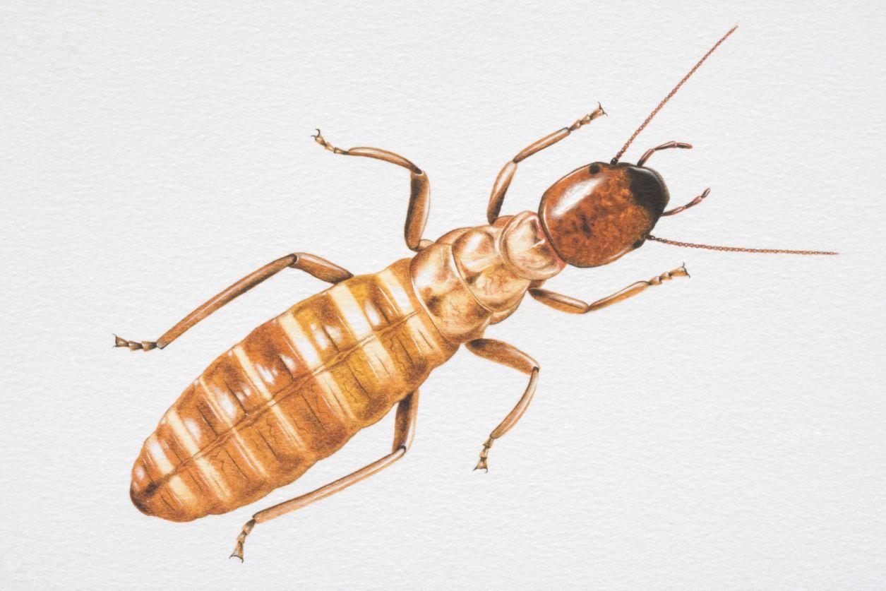 Why Do Termites Follow Ink Trails Bolpoin Standard R8