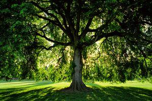 Vivid green tree at sunrise in public park in Portland, Oregon