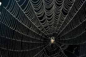 SPIDER IN DEW-COVERED WEB