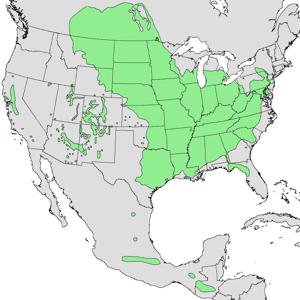 Mapa de distribución de América del Norte del árbol de boxelder