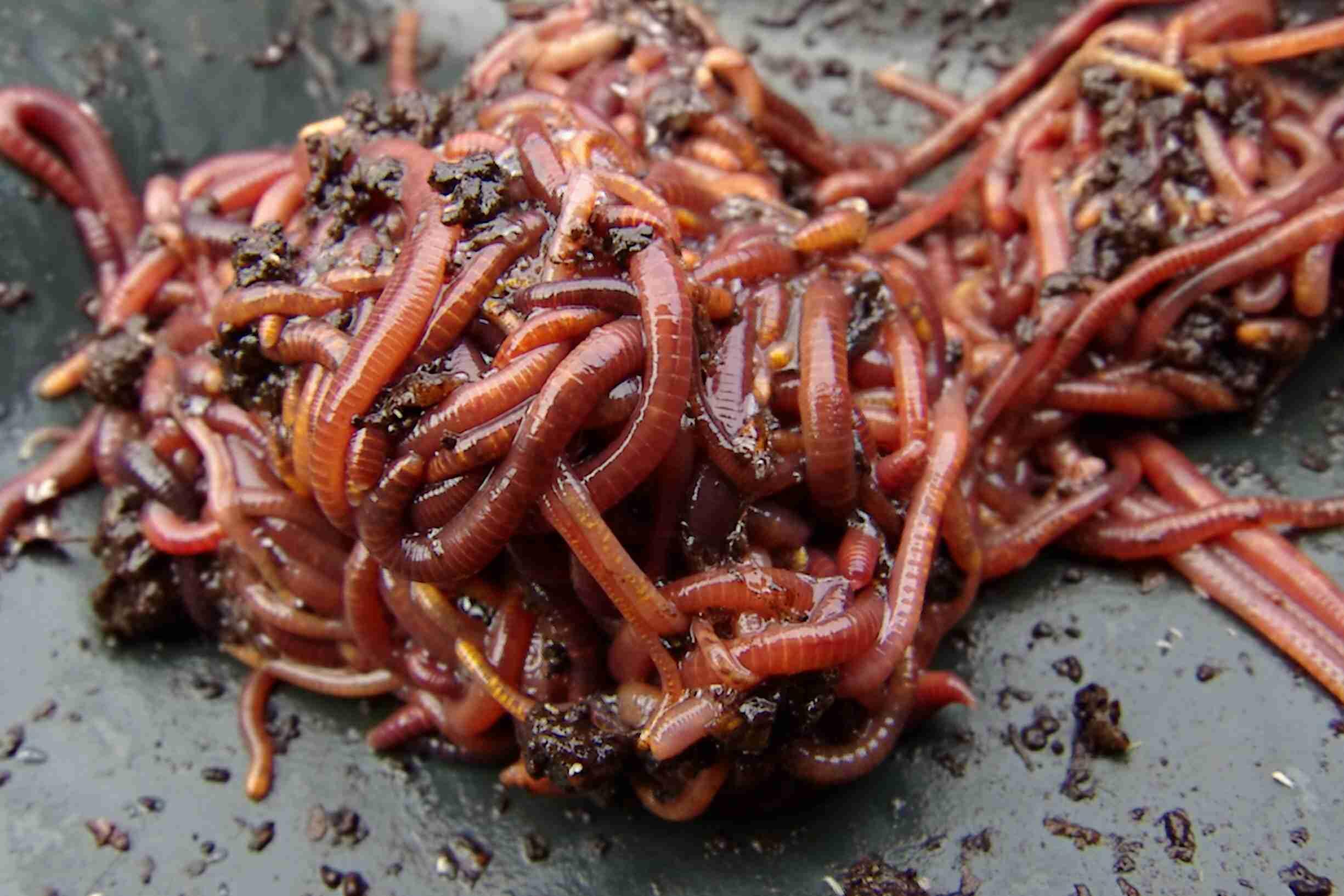 Interesting Facts About Invertebrates