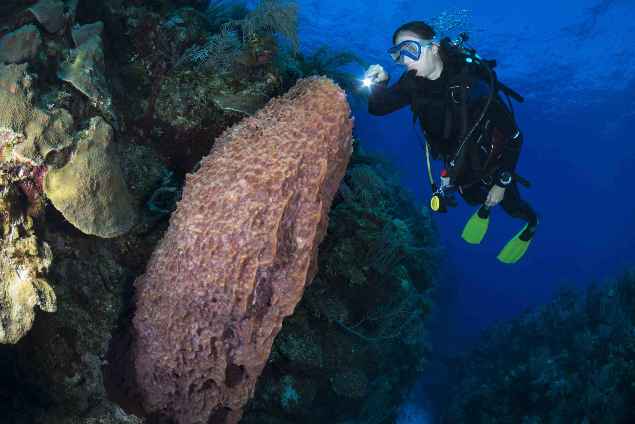 Giant barrel sponge and diver