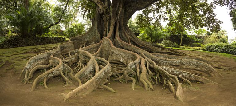 Root Metaphors Definition And Examples