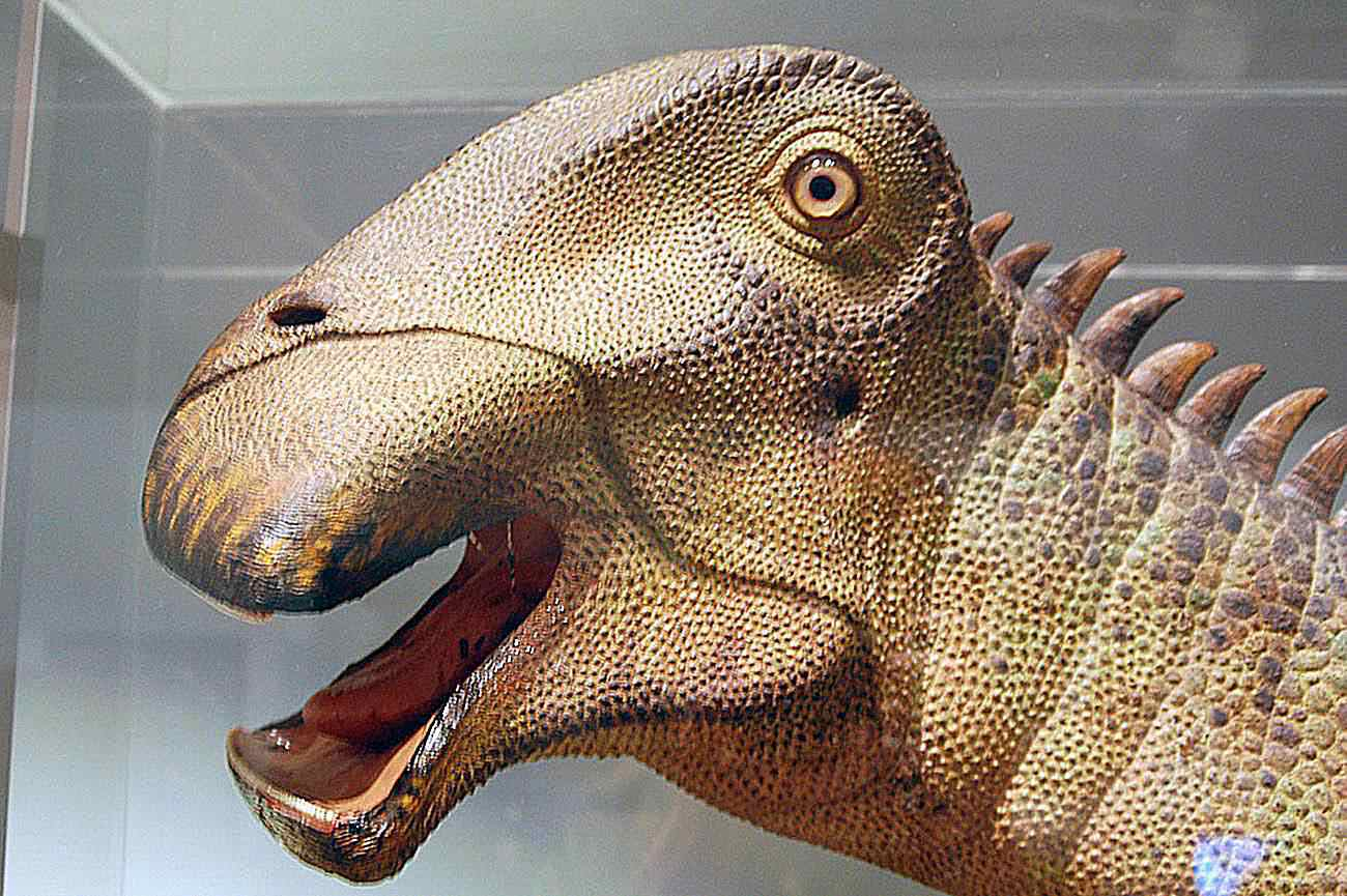 Close-up of the face of a <I>Nigersaurus</I> plant-eater, showing its pebbly skin and bony spiked spine