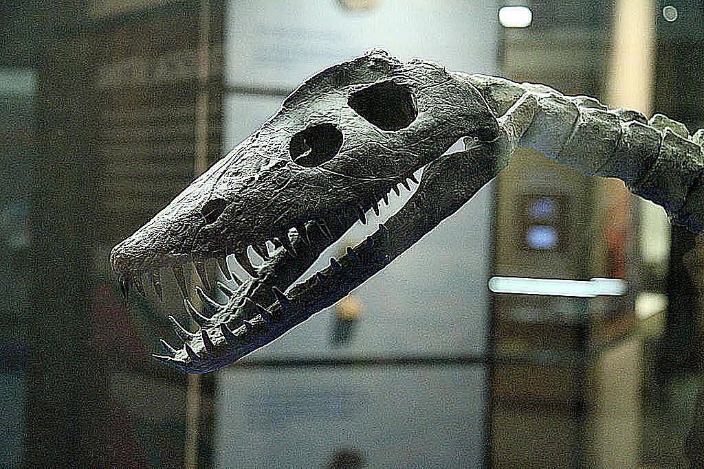 στυλόσαυρος