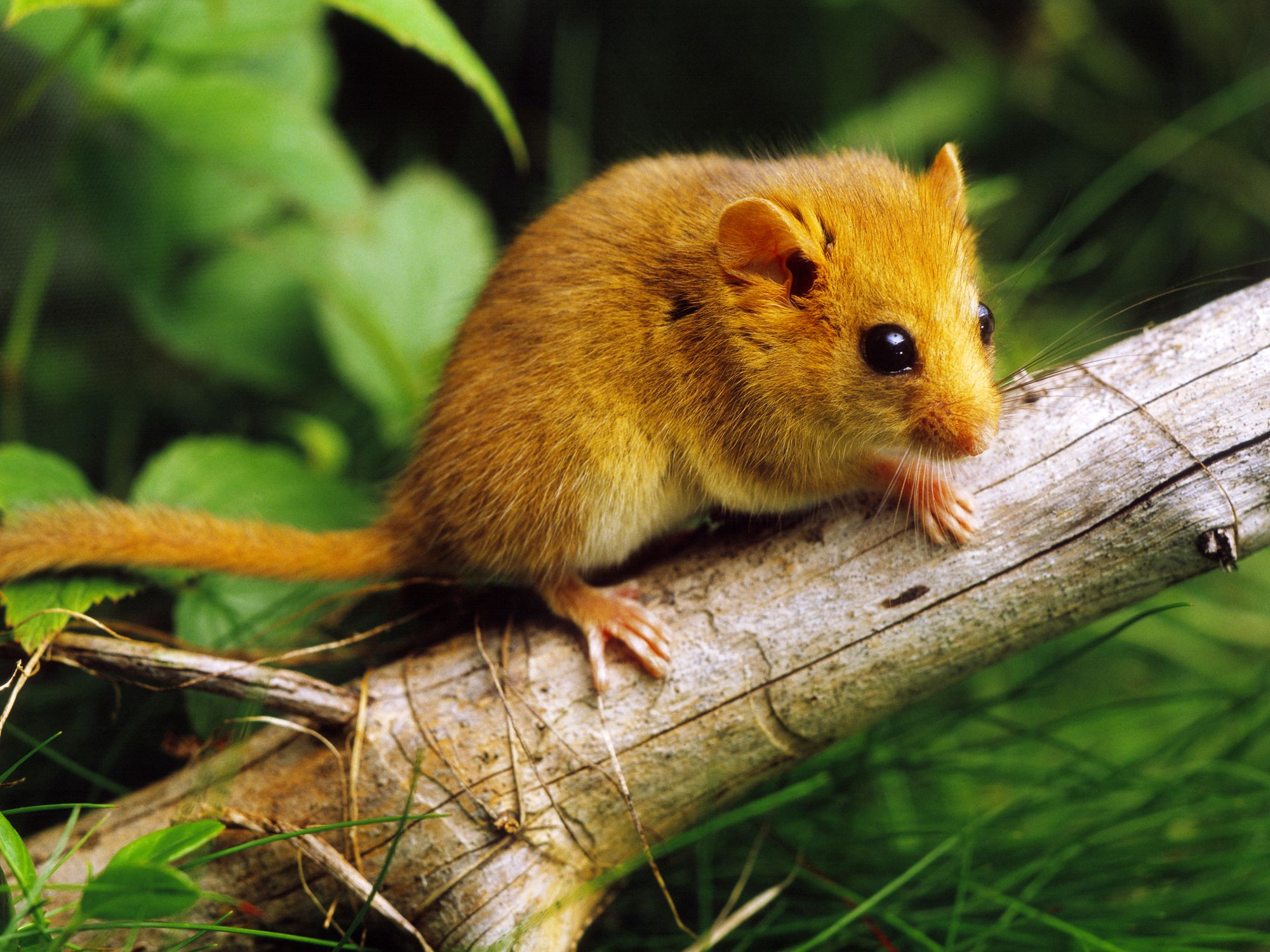 Facts and Characteristics of Rodents