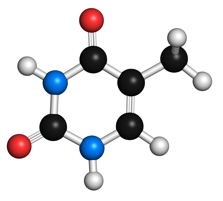 Thymine pyrimidine nitrogen base molecule